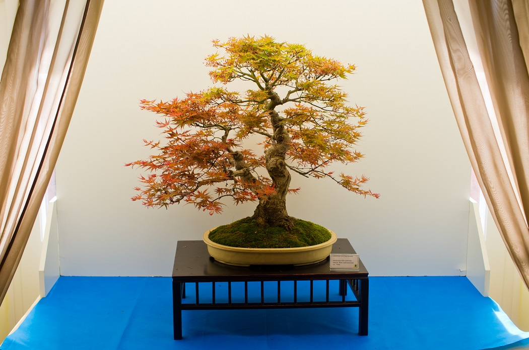 Bonsai Photo Of The Day 12/20/16 ( Difference Between Bonsai & Penjing)