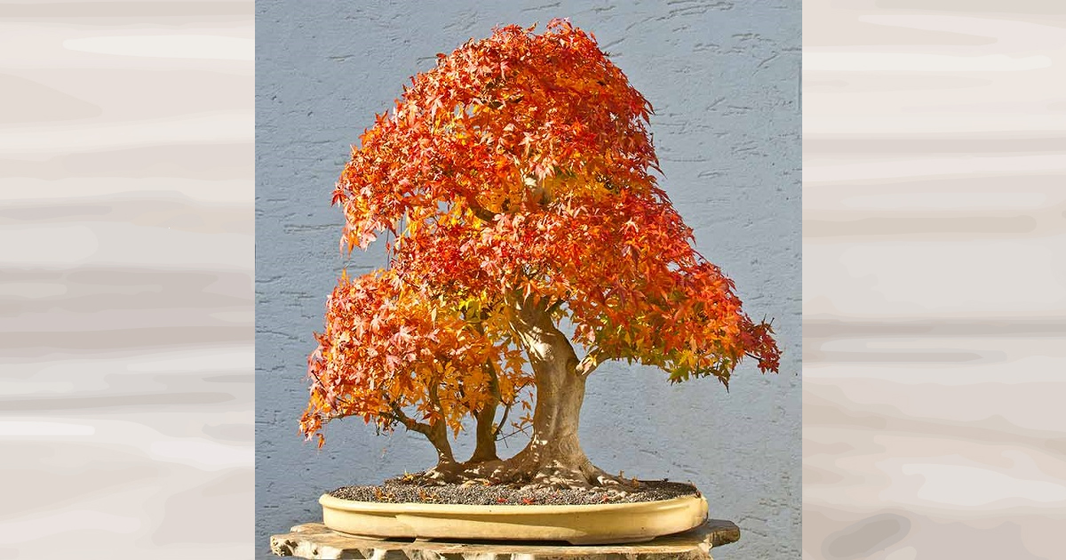 Bonsai Photo Of The Day 12/27/2016 (Why Do We Need Good Bonsai Soil?)
