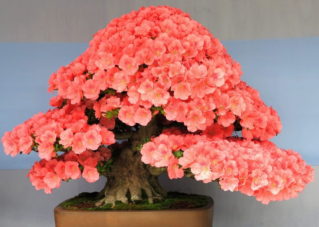 Bonsai Photo Of The Day 1/25/2017