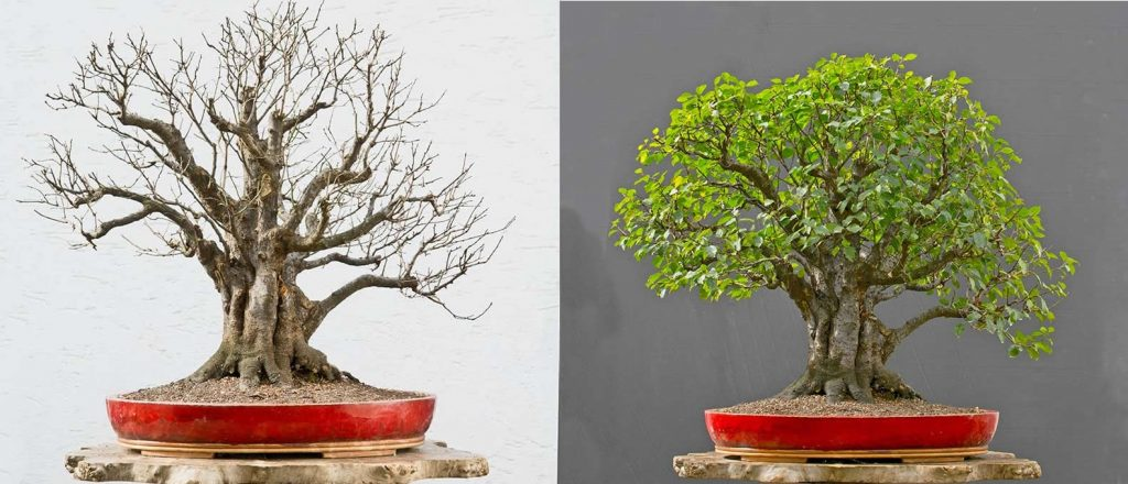 Bonsai Photo Of The Day 1/27/2017