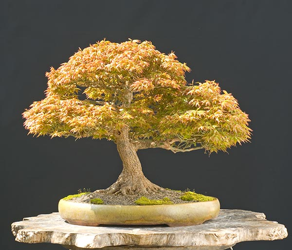 Bonsai Photo Of The Day 1/17/2017