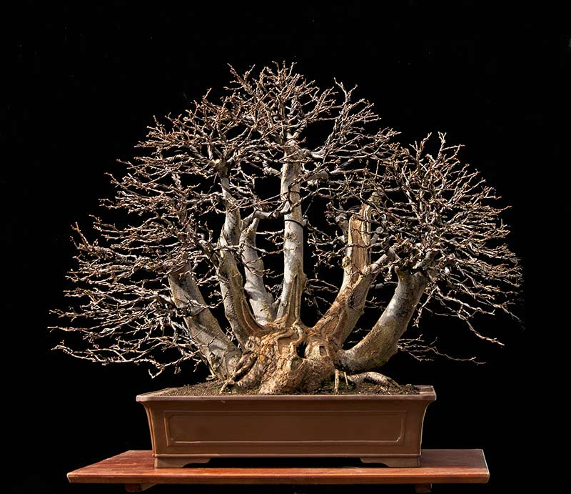 Bonsai Photo Of The Day 2/13/2017