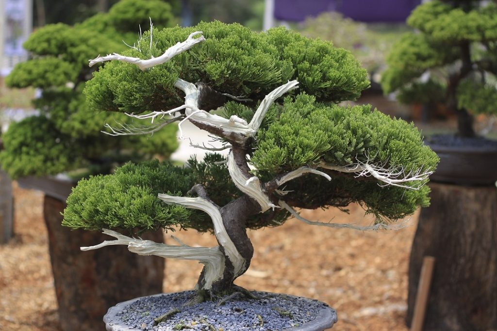 Bonsai Photo Of The Day 2/16/2017