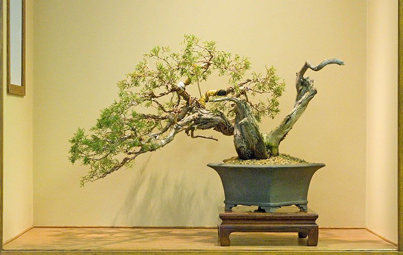 Bonsai Photo Of The Day 2/27/2017