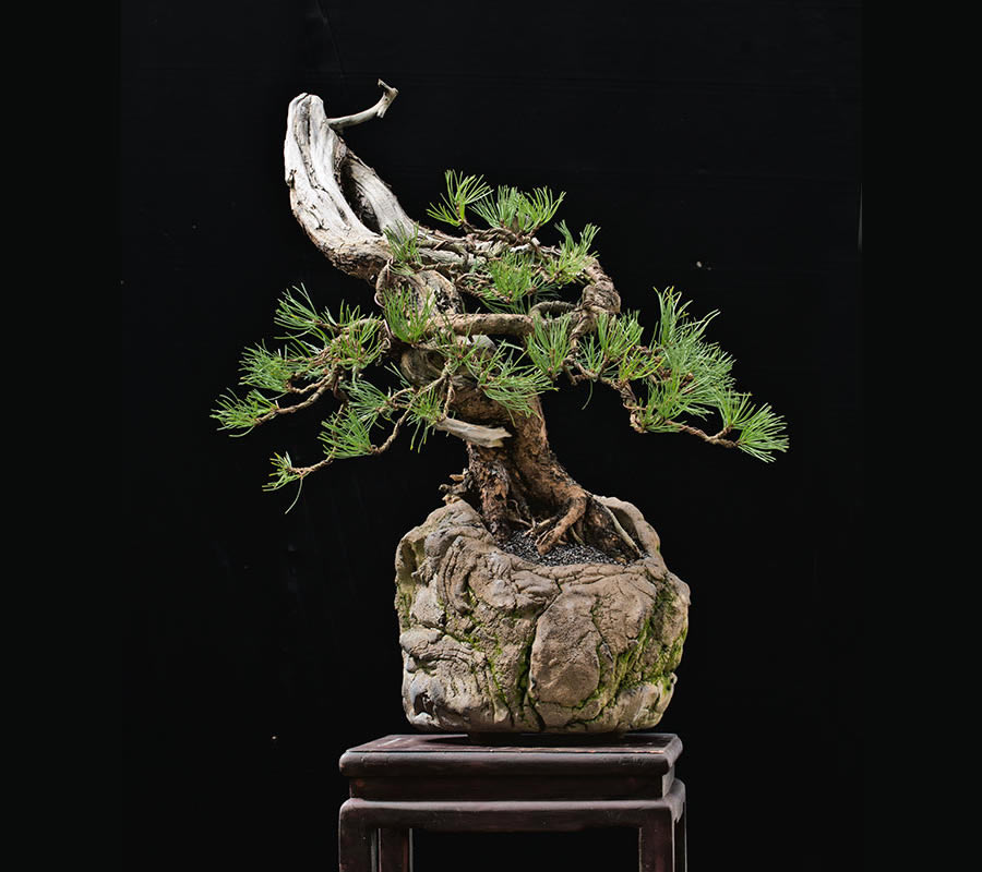 Bonsai Photo Of The Day 2/28/2017