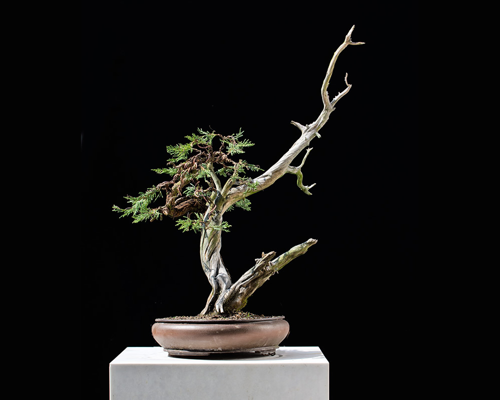 Bonsai Photo Of The Day 2/6/2017