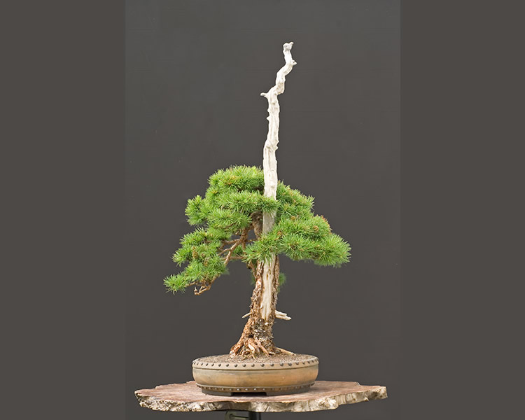 Bonsai Photo Of The Day 2/7/2017