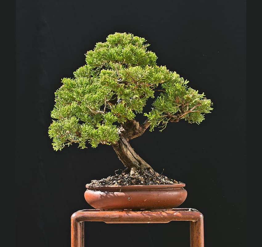 Bonsai Photo Of The Day 3/1/2017