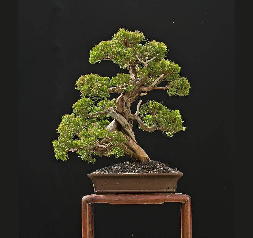 Bonsai Photo Of The Day 3/3/2017