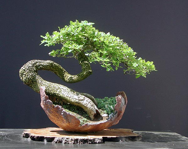 Bonsai Photo Of The Day 3/20/2017
