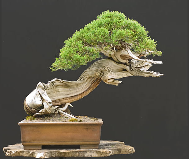 Bonsai Photo Of The Day 3/22/2017