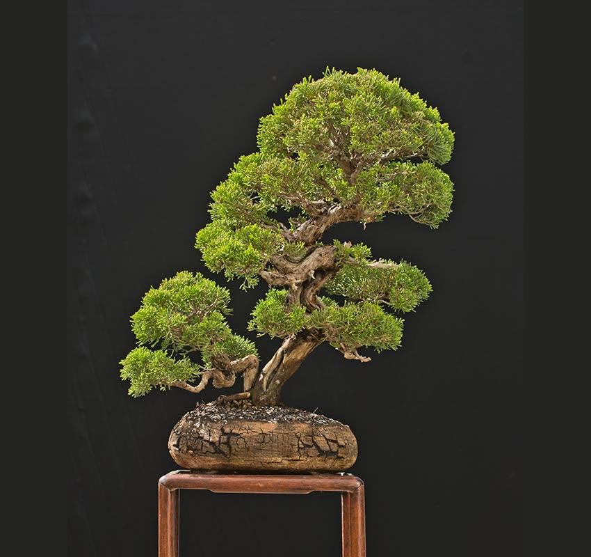 Bonsai Photo Of The Day 3/23/2017