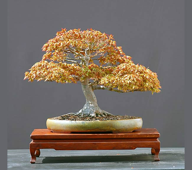 Bonsai Photo Of The Day 3/24/2017