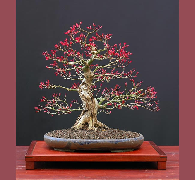 Bonsai Photo Of The Day 4/11/2017