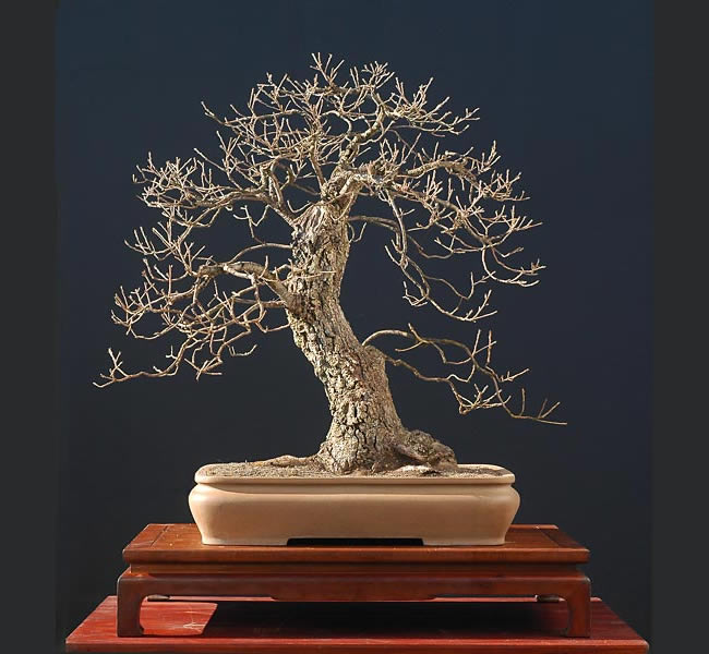 Bonsai Photo Of The Day 4/13/2017