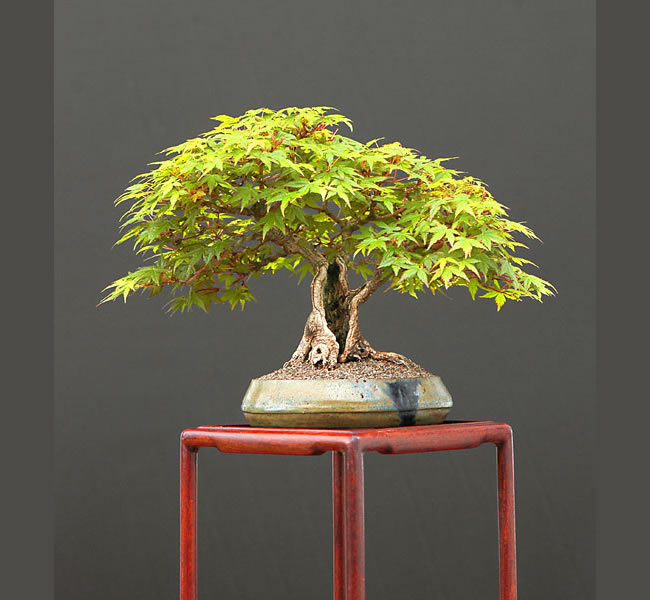 Bonsai Photo Of The Day 4/4/2017