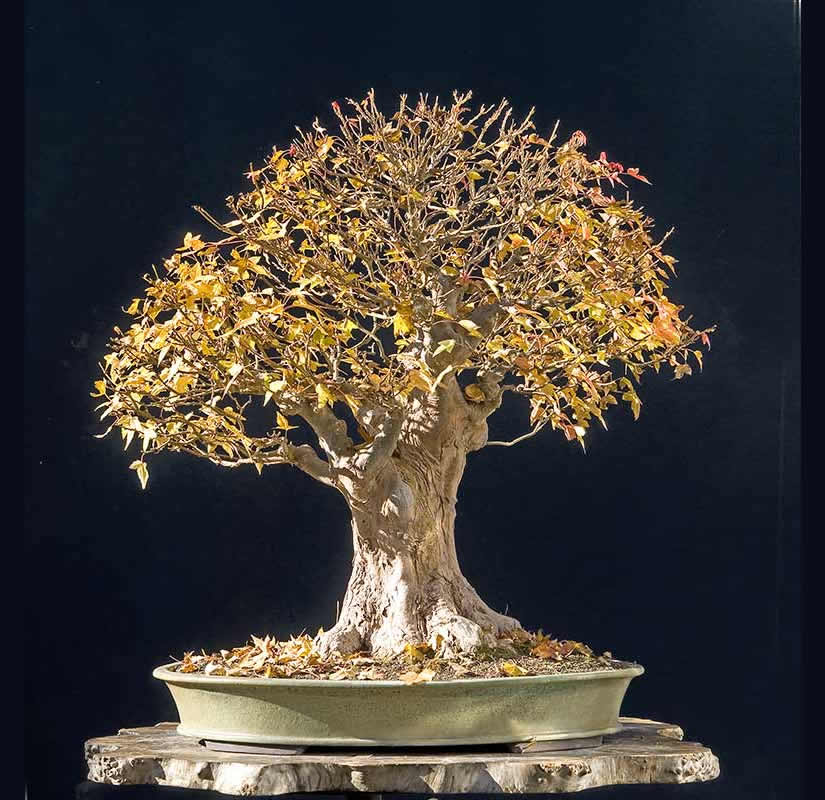 Bonsai Photo Of The Day 5/19/2017