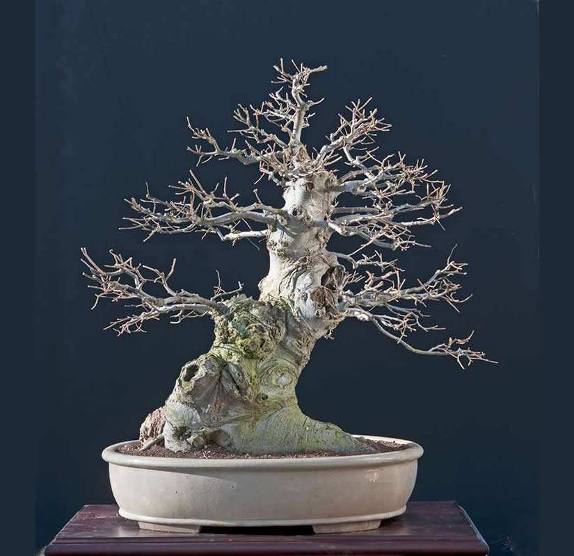 Bonsai Photo Of The Day 5/26/2017
