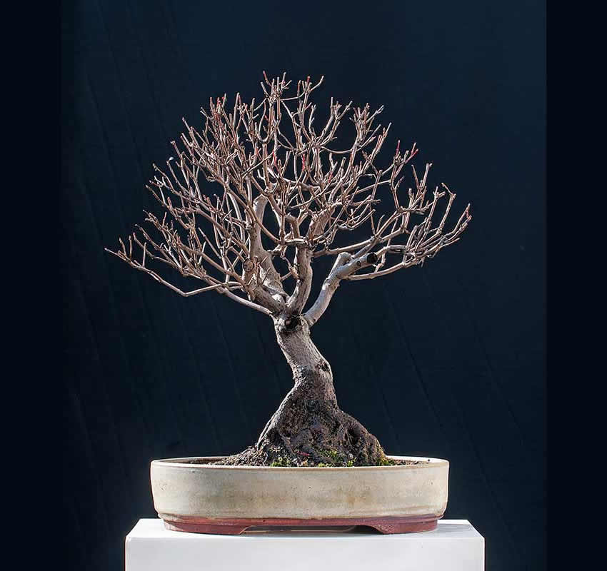 Bonsai Photo Of The Day 5/9/2017