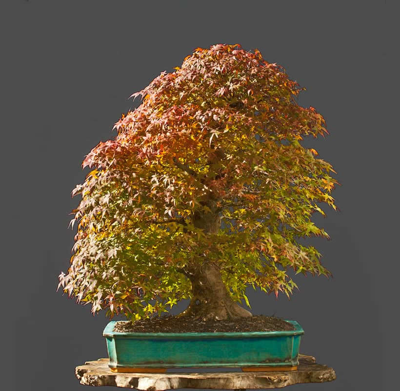 Bonsai Photo Of The Day 8/11/2017