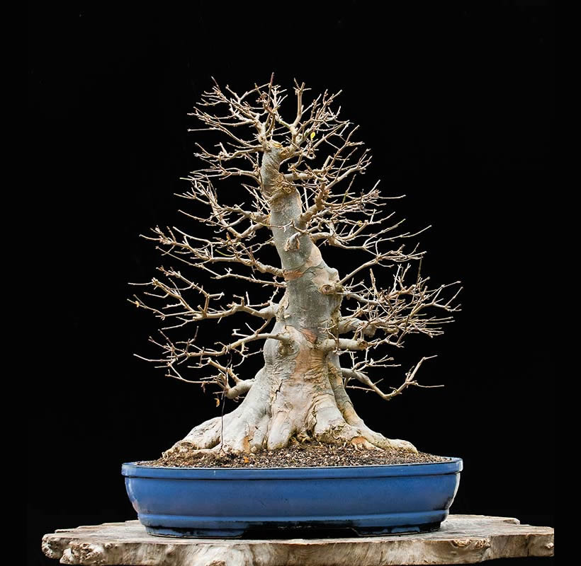 Bonsai Photo Of The Day 8/17/2017