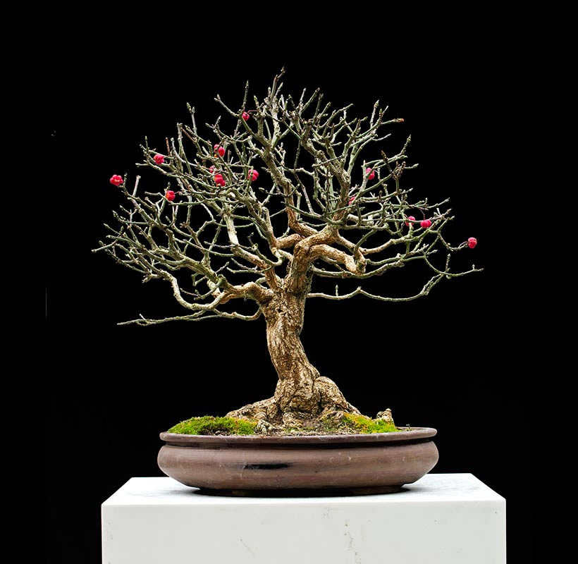 Bonsai Photo Of The Day 8/18/2017