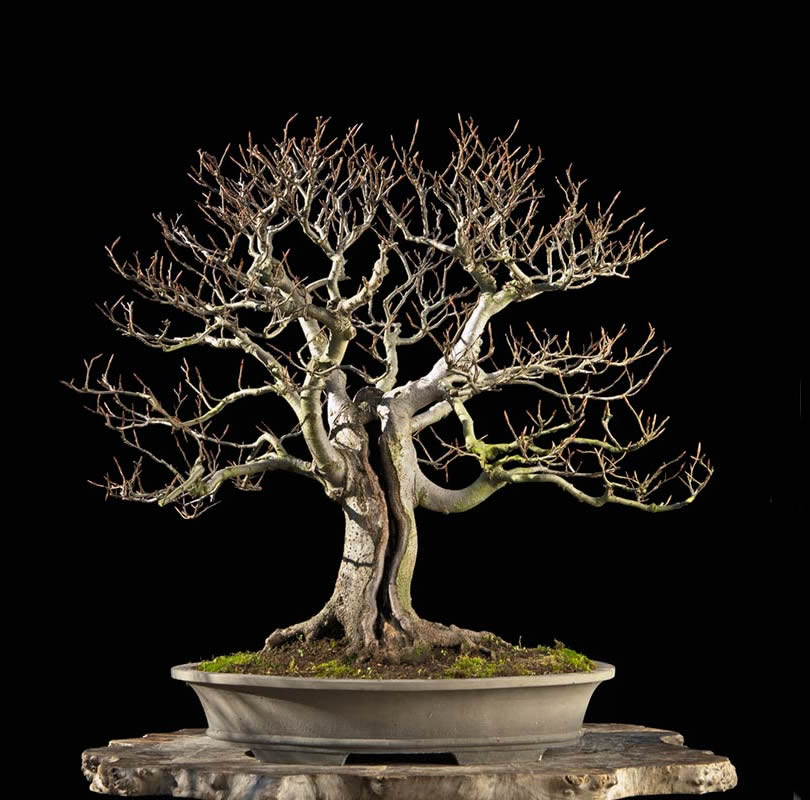 Bonsai Photo Of The Day 8/23/2017
