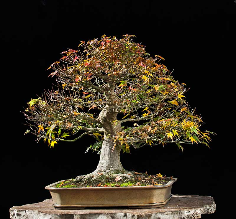 Bonsai Photo Of The Day 8/29/2017