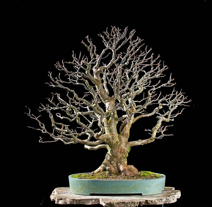 Bonsai Photo Of The Day 9/1/2017