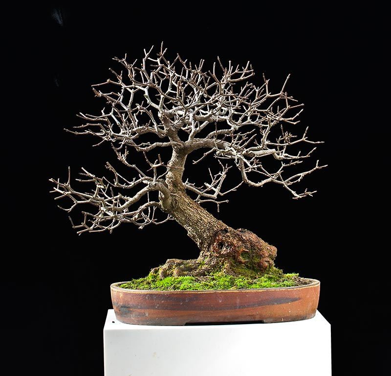 Bonsai Photo Of The Day 9/14/2017