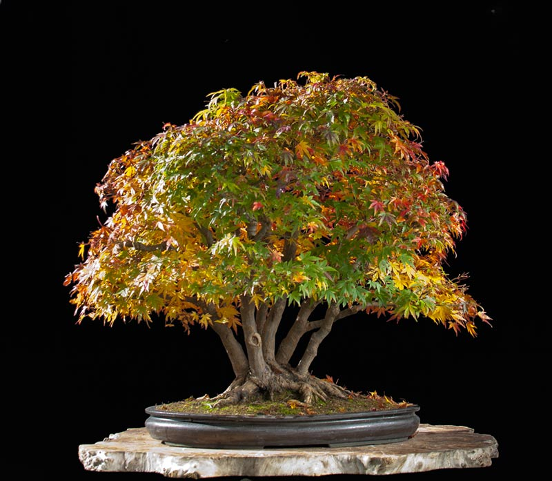 Bonsai Photo Of The Day 9/6/2017