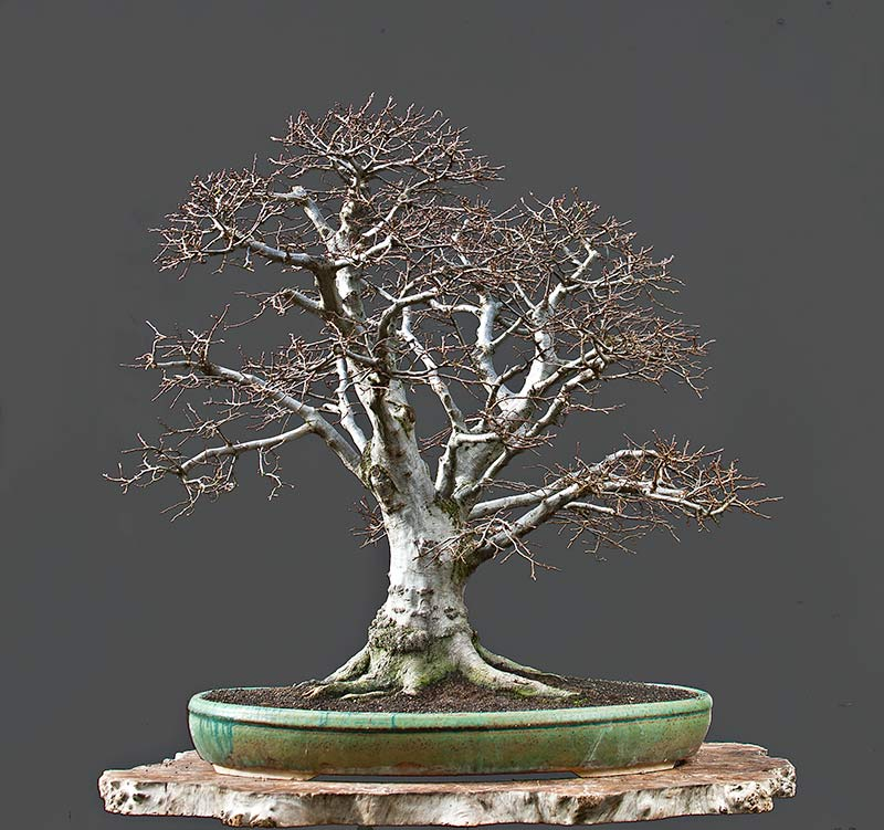 Bonsai Photo Of The Day 9/7/2017