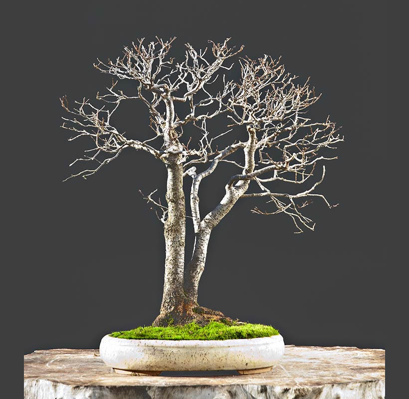 Bonsai Photo Of The Day 9/18/2017