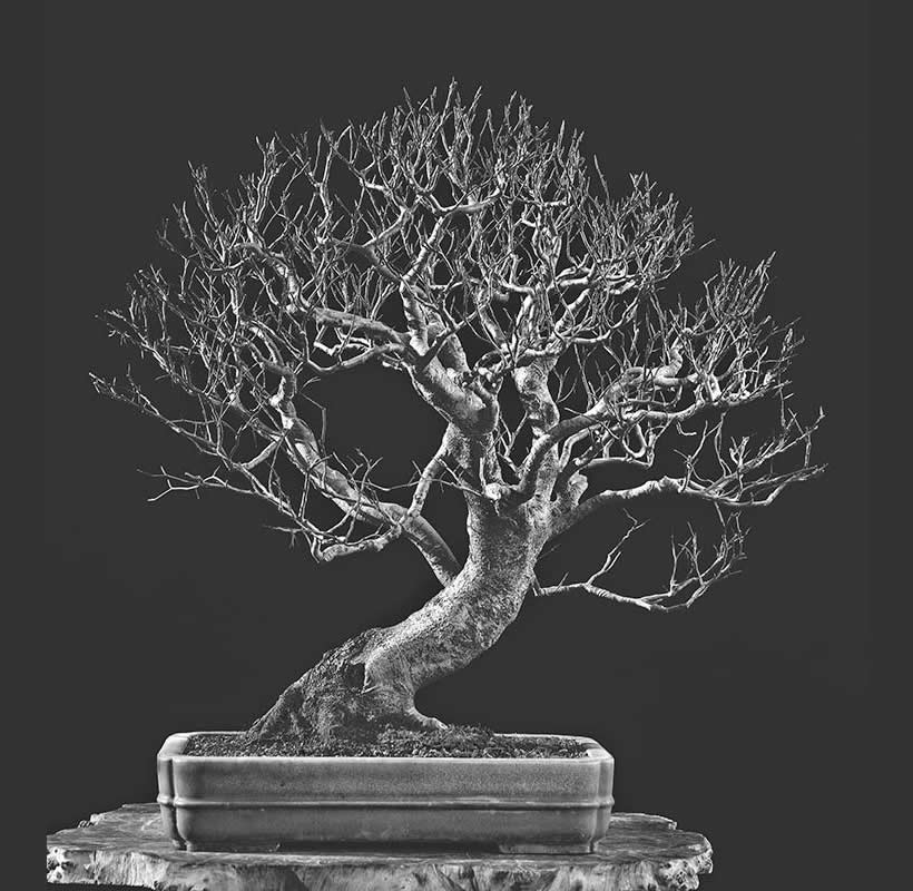Bonsai Photo Of The Day 9/20/2017
