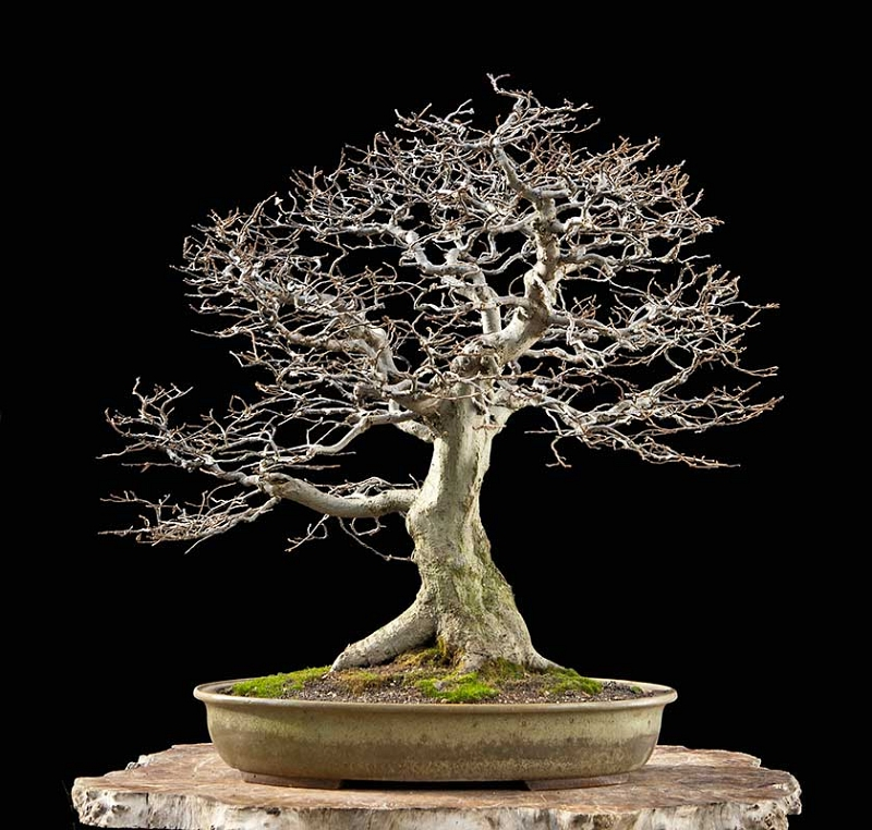 Bonsai Photo Of The Day 9/21/2017