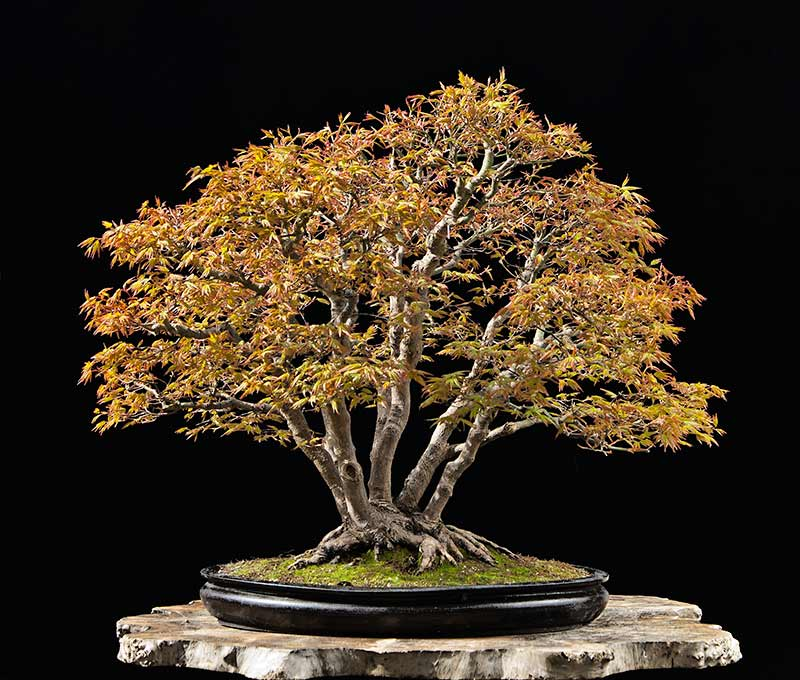 Bonsai Photo Of The Day 9/22/2017