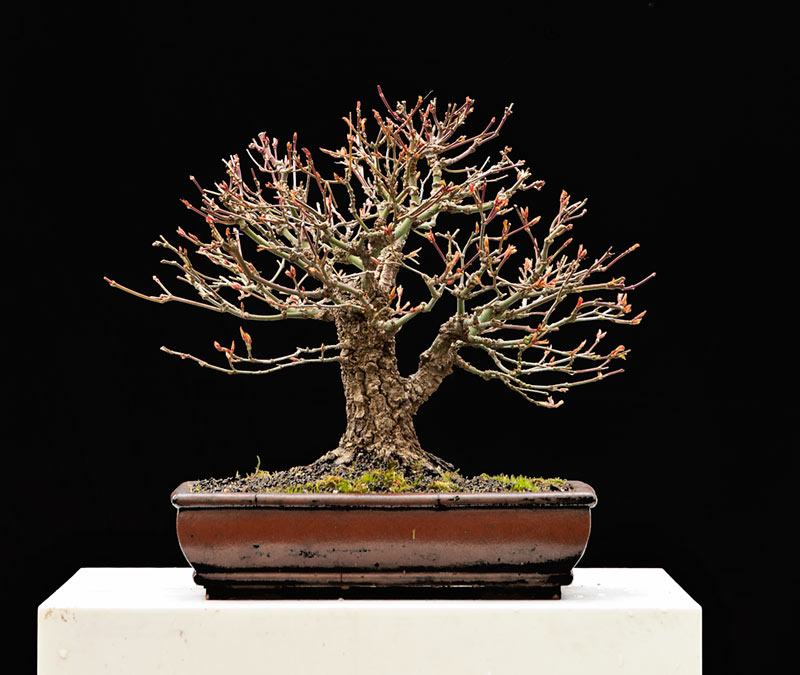 Bonsai Photo Of The Day 9/25/2017