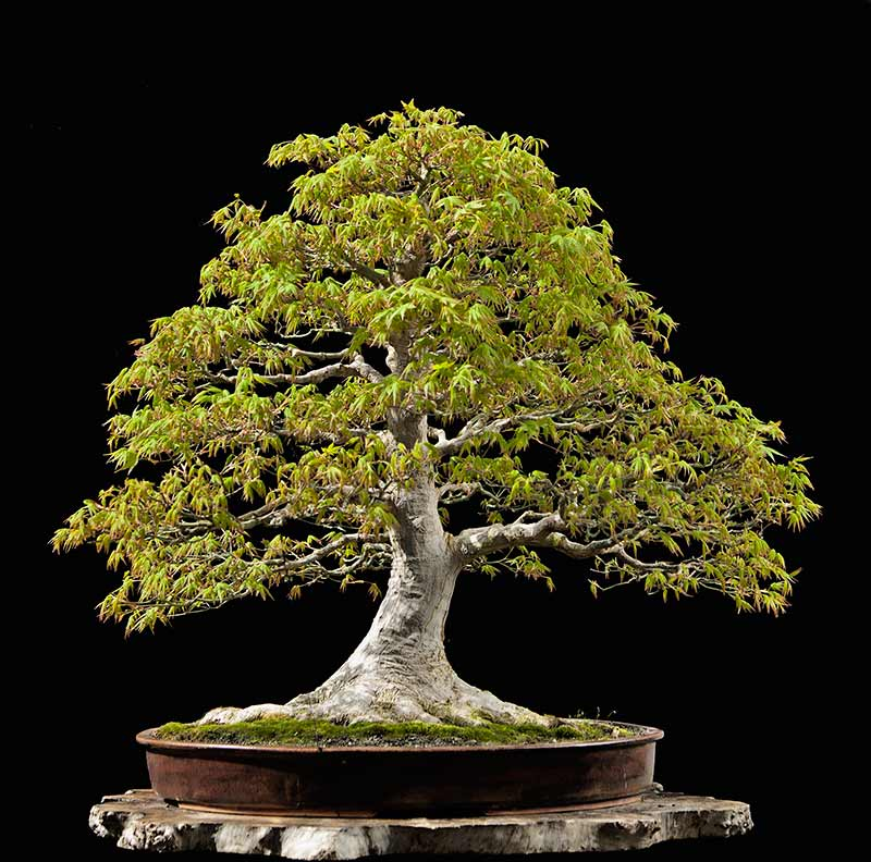 Bonsai Photo Of The Day 9/27/2017