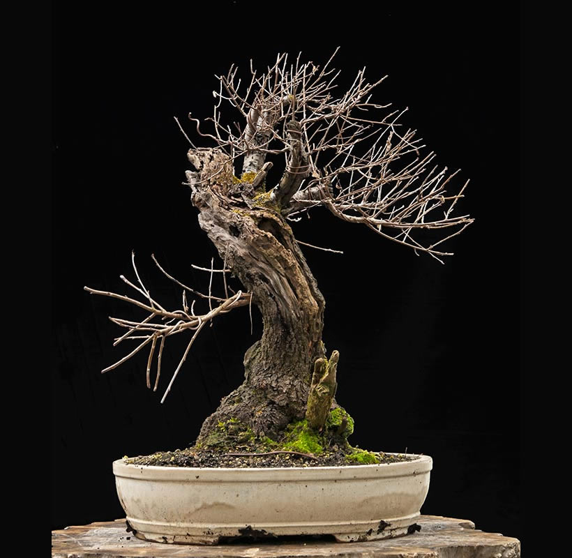 Bonsai Photo Of The Day 9/29/2017