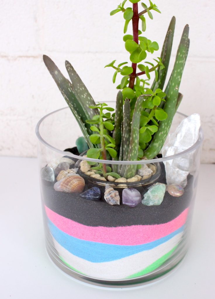DIY Sand and Succulent Terrarium