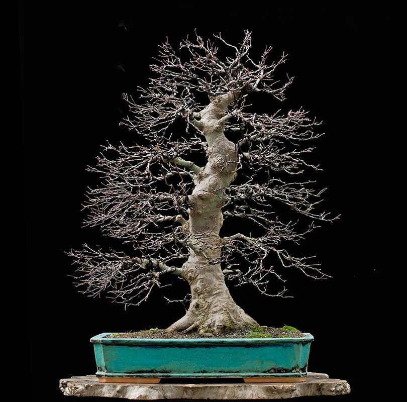 Bonsai Photo Of The Day 10/19/2017