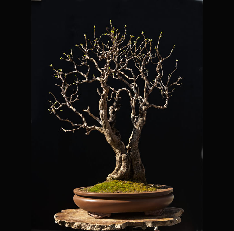 Bonsai Photo Of The Day 10/2/2017