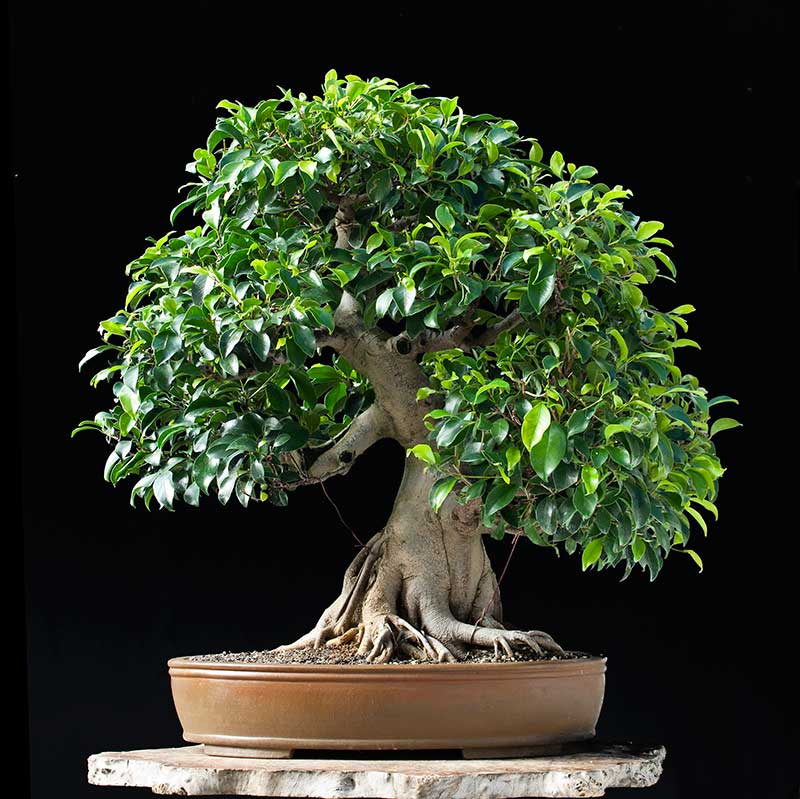 Bonsai Photo Of The Day 10/20/2017