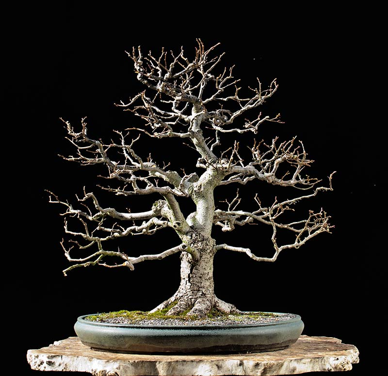 Bonsai Photo Of The Day 10/23/2017