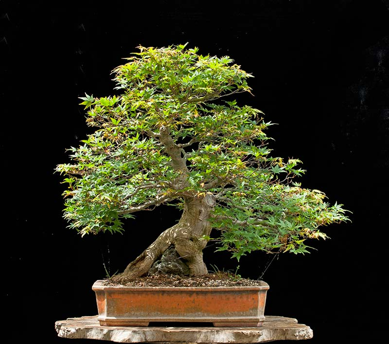 Bonsai Photo Of The Day 10/26/2017