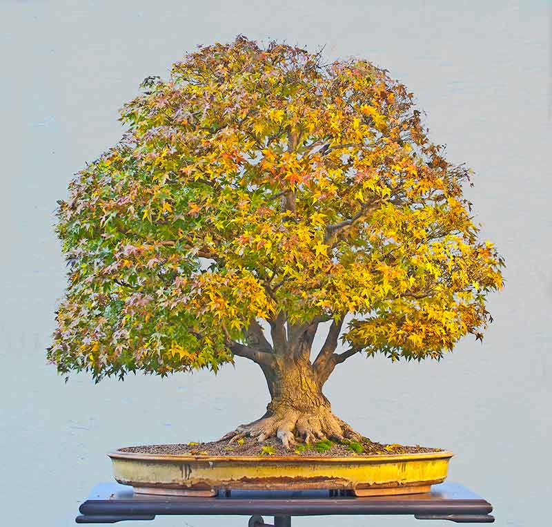 Bonsai Photo Of The Day 12/13/2017