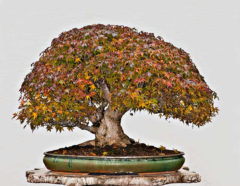 Bonsai Photo Of The Day 12/14/2017