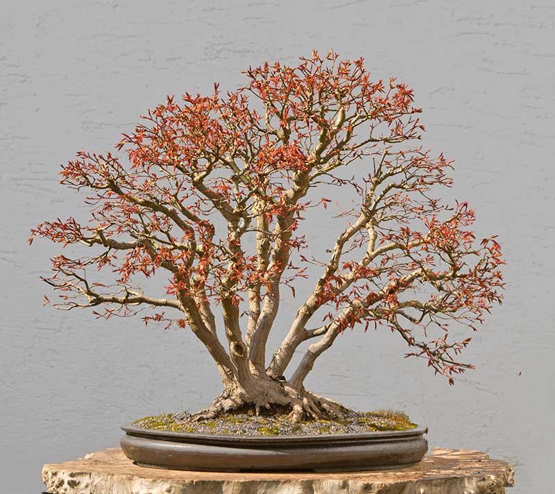 Bonsai Photo Of The Day 12/18/2017