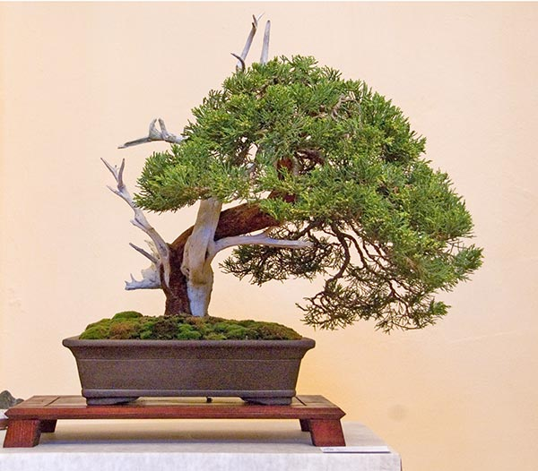 Bonsai Photo of the Day 10-10-2018