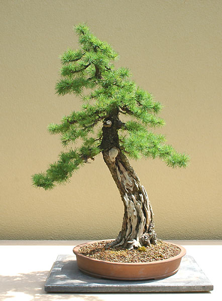 Bonsai Photo of the Day 10-11-2018